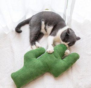 Cactus Catnip